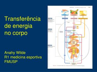 Transferência  de energia  no corpo Anahy  Wilde R1 medicina esportiva FMUSP