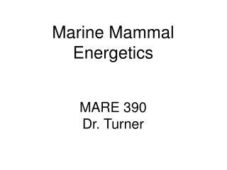 Marine Mammal Energetics MARE 390 Dr. Turner
