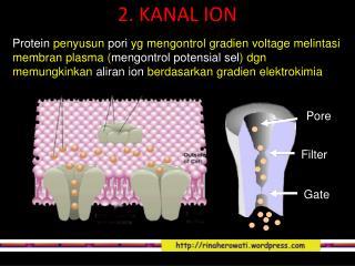 2. KANAL ION