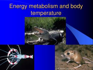 Energy metabolism and body temperature
