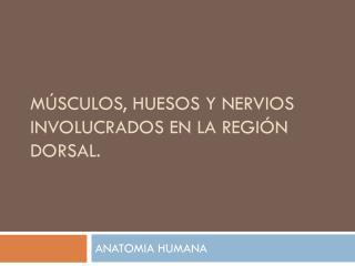 Músculos, Huesos y Nervios involucrados en la región dorsal.