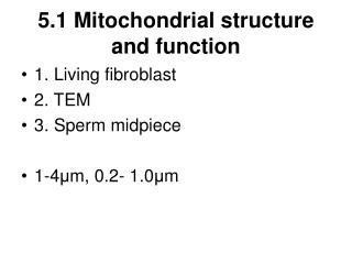 5.1 Mitochondrial structure and function