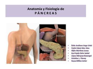 Anatomía  y Fisiología de  P Á N C R E A S