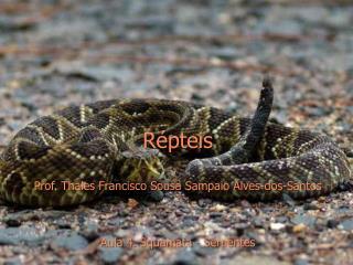Répteis Prof.  Thales Francisco Sousa  Sampaio Alves -dos-Santos Aula  4.  Squamata  -  Serpentes