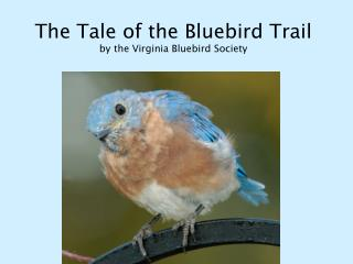 The Tale of the Bluebird Trail by the Virginia Bluebird Society