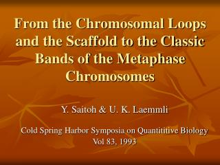 From the Chromosomal Loops and the Scaffold to the Classic Bands of the Metaphase Chromosomes