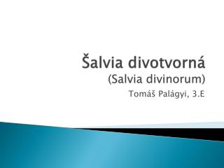 Šalvia divotvorná ( Salvia divinorum )