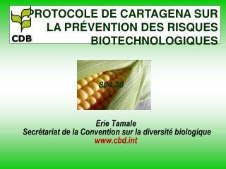 Erie Tamale  Secr tariat de la Convention sur la diversit  biologique cbdt