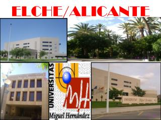 ELCHE/ALICANTE