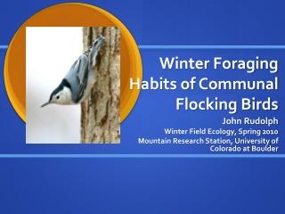 Winter Foraging Habits of Communal Flocking Birds