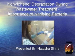 Nonylphenol Degradation During Wastewater Treatment - Importance of Nitrifying Bacteria