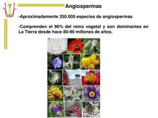 Angiospermas -Aproximadamente 250.000 especies de angiospermas .