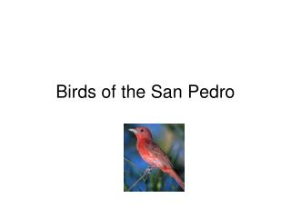 Birds of the San Pedro