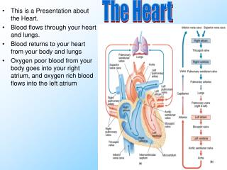 This is a Presentation about the Heart. Blood flows through your heart and lungs.