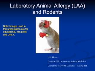 Laboratory Animal Allergy (LAA) and Rodents