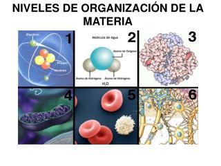 NIVELES DE ORGANIZACI�N DE LA MATERIA