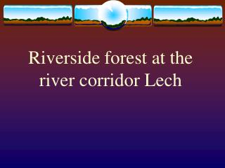 Riverside forest at the  river corridor Lech