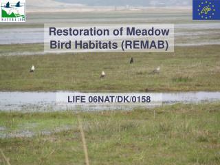 Restoration of Meadow Bird Habitats (REMAB)