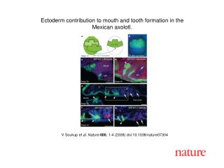 V Soukup et al. Nature 000 , 1- 4  (2008) doi:10.1038/nature07 304