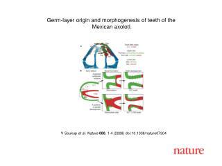 V Soukup et al. Nature 000 , 1- 4  (2008) doi:10.1038/nature07 304