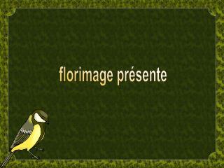Florimage pr sente