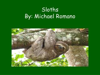 Sloths By: Michael Romano