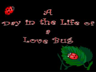 A Day in the Life of  a  Love Bug