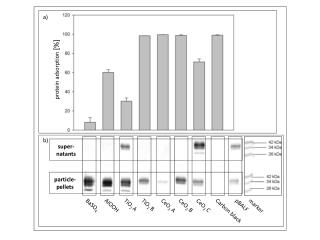 protein adsorption  [%]