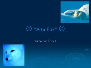    * Artic  Fox*   