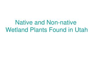 Native and Non-native  Wetland Plants Found in Utah
