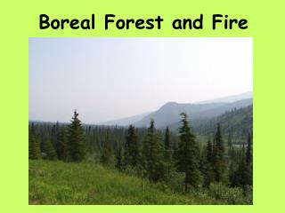 Boreal Forest and Fire