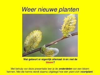 Weer nieuwe planten