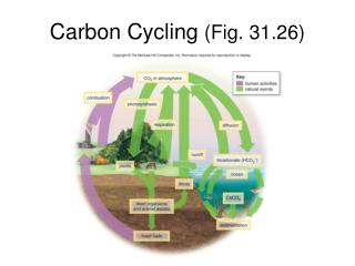Carbon Cycling  (Fig. 31.26)