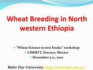 Wheat Breeding in North western Ethiopia