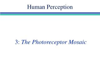 3:  The Photoreceptor Mosaic
