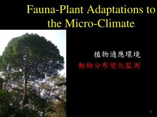 Fauna-Plant Adaptations to the Micro-Climate