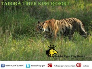 Hotels and Resorts in Tadoba | Resorts in Tadoba