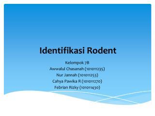 Identifikasi Rodent