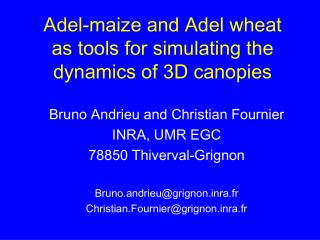 Adel-maize and Adel wheat as tools for simulating the dynamics of 3D canopies