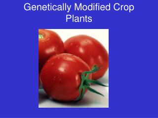 Genetically Modified Crop Plants