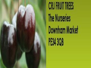Fruit Tree Nursery