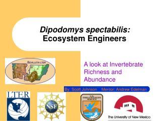 Dipodomys spectabilis:  Ecosystem Engineers
