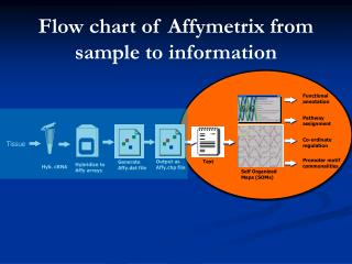 Flow chart of Affymetrix from sample to information