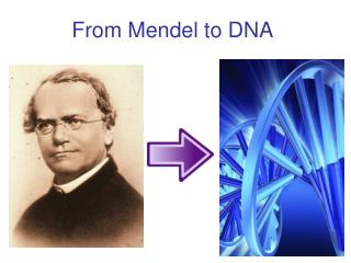 From Mendel to DNA