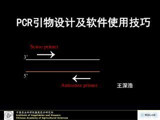 PCR ???????????