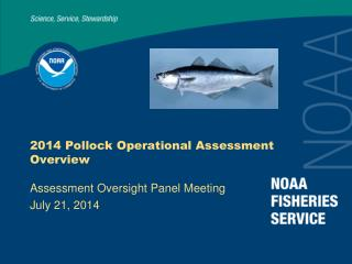 2014 Pollock Operational Assessment Overview