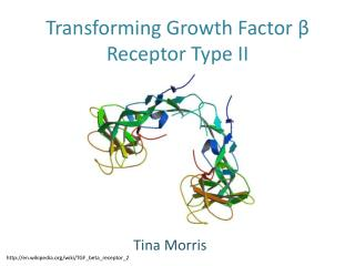 Transforming Growth Factor  β  Receptor Type II