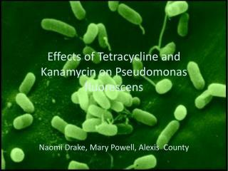 Effects of Tetracycline and Kanamycin on Pseudomonas fluorescens