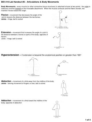 BIO 210 Lab Handout #8 – Articulations & Body Movements