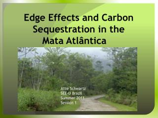 Edge Effects and Carbon Sequestration in the Mata Atlântica